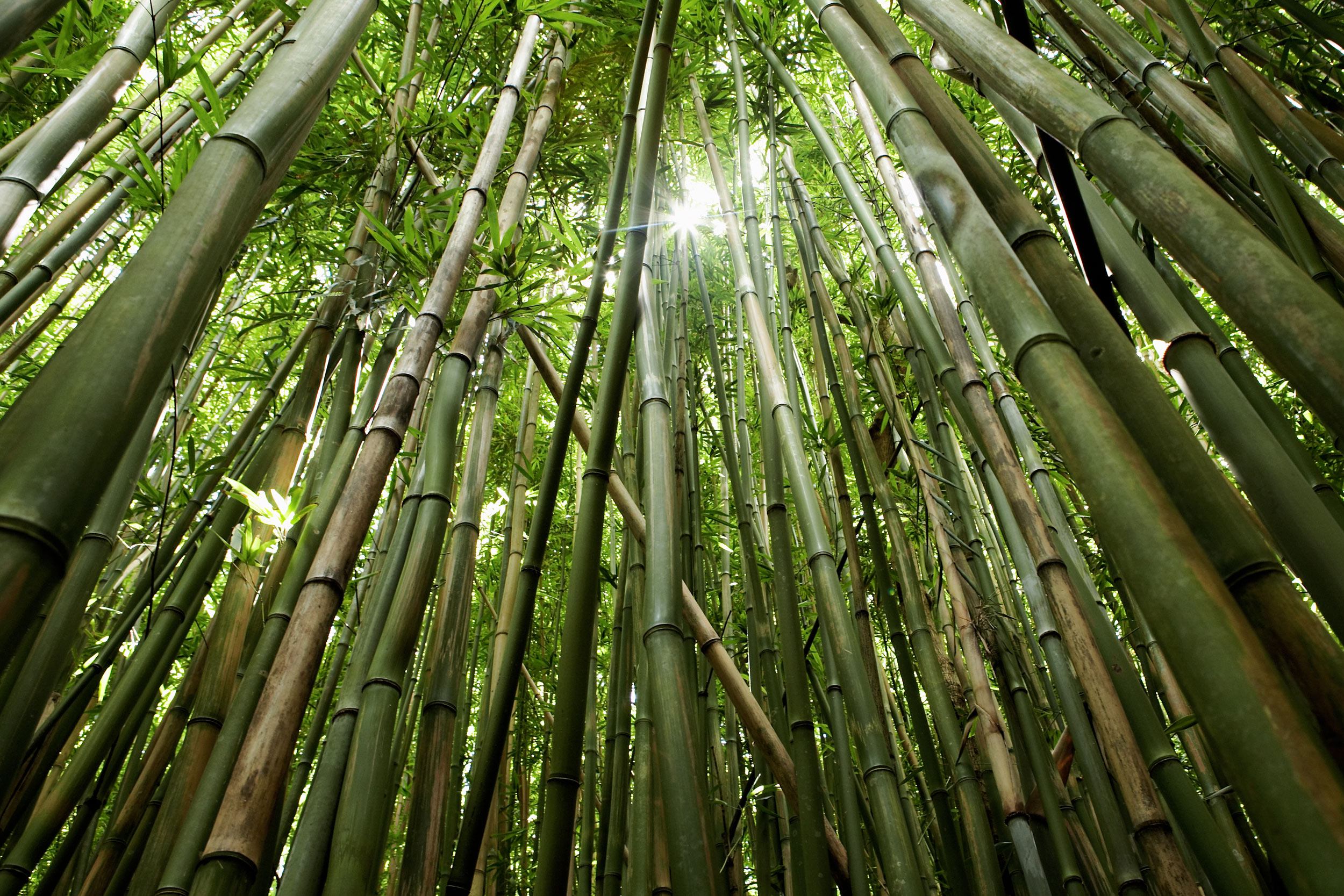 200415web-049-bamboo_forest-02